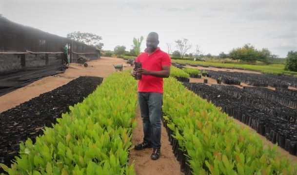 The hiveonline platform is expanding to agricultural cooperatives in Mozambique! 1