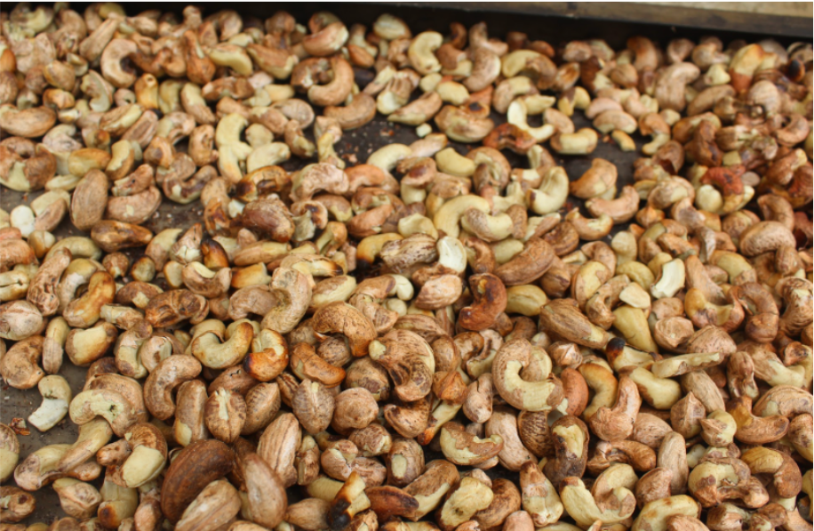 The Mozambican Raw Cashew Nuts Processing Sector is Under Pressure - How hiveonline can Strengthen Small Holder Farmers' position through  mycoop.online 1